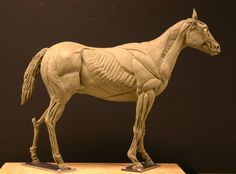 Horse_Ecorche___Day_15_by_aerie_.jpg 1,387×1,024 pixels