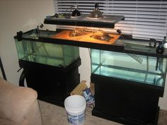 above-tank basking area which also doubles as a land bridge between the two tanks
