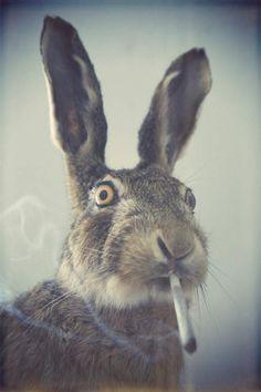 a rabbit smoking weed