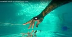 """Filmed over three years by the musical trio People The Kangaroo for their single, """"You Would Not Believe Me,"""" a globe-trotting hand explores oceans, forests,. Travel Around The World, Around The Worlds, Gopro Video, Gopro Action, Camera Shop, Gif Of The Day, Le Web, 3 Years, Kangaroo"""