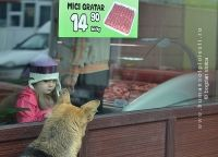 NON-humans of Ploiesti - The lucky dog Noroc, Dogs, Doggies, Pet Dogs