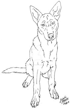 Belgian Malinois by Canis-Simensis on DeviantArt