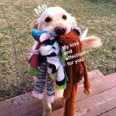 Feel good Wholesome Meme Dump - Imgur