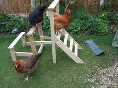 Chicken play area. not crazy.
