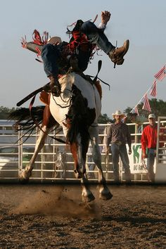 What a great action shot! p.s. I love cowboys! ;o)