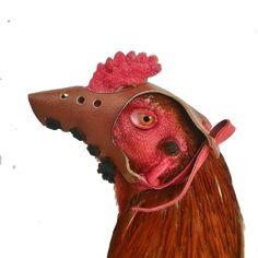 CARA PENGUNAAN BUGKUS CUCUK KULIT  :  1.pasangkan bungkus cucup di paruh ayam denganmengaitkan tali ke jengger ayam  2. Ayam siap untuk berlatih  MANFAAT BUNGKUS CUCUK kulit :  1. memperpanjang nafas ayam dengan minim oksigen karena ditutup  2. melatih ayam memukul tanpa mematuk  3. Menghindari kerusakan lawan ketika latihan abar Rooster, Bangkok, Animals, Animales, Animaux, Roosters, Animal Memes, Animal, Animais