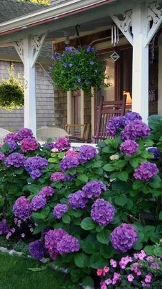 Flower Bed Designs, Flower Garden Design, Flower Gardening, Container Gardening, Hydrangea Landscaping, Backyard Landscaping, Landscaping Front Of House, Backyard Garden Landscape, House Landscape