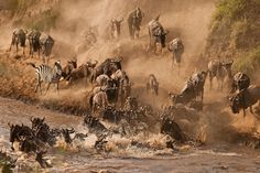 Mara River is definitely worth a visit during the time of the wildebeest migration. Watch the large herd cross the Mara River while battling hungry crocodiles.
