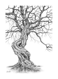twisted tree pencil drawing by kevin williamson