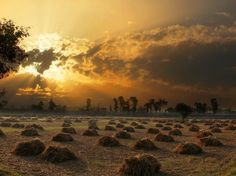 Pakistan - Harvesting crops.