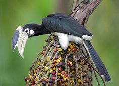 aves exóticas-17