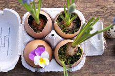 Filz und Garten