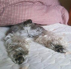 Schnauzer bums are just the best!