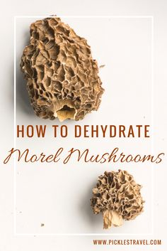 Recipe guide for how to dehydrate wild morel mushrooms after foraging for them or buying them in the store. As dried mushrooms they will last much longer and can be used in sauces, pastas and other healthy dishes for a taste of spring all year long.