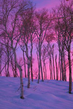 Winter trees, snow and beautiful sky ...
