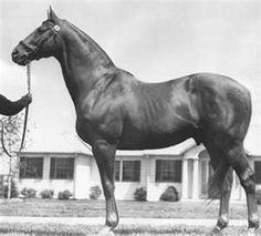 Man o'War (Fair Trial - Marubah), the sire of War Admiral and grandsire of Seabiscuit.