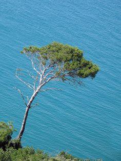 Gargano - Puglia - Apulia - Italia - Italy