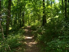 Nothing to do? Want some fresh air on a gorgeous day? Pick a path @ Brady's Run Park, walk and enjoy!
