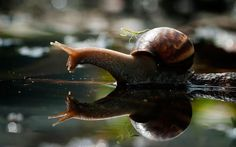 10 Most Amazing Pictures Ever | the world s top 10 most amazing images of snails