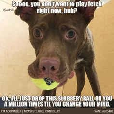 """""""If at first you don't succeed, annoy the heck out of 'em til they give in!"""" ;) #dogphilosophy #mcaspets #adopt"""