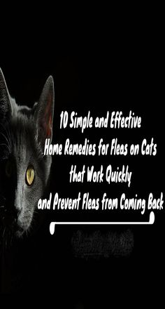 While a lot of cats don't mind playing in the drip from a faucet, they'll object strenuously to a bath. It's the fastest way to get fleas off Kitty, so be prepared before bringing Kitty to the water. Coconut Oil Cats, Flea Remedies, Cat Health Care, Sick Cat, Cat Signs, Lots Of Cats, Health Facts, Health Problems, Fleas