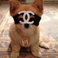 fashion pooch