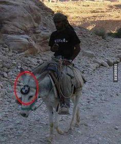 BMW varianta pentru desert