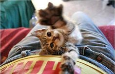 cute kitten 22 Daily Awww: Theres just something about kittens (36 photos)