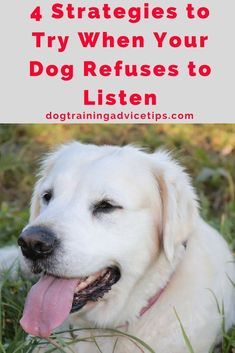 4 Strategies to Try When Your Dog Refuses to Listen | Dog Training Tips | Dog Obedience Training | Dog Training Ideas | http://www.dogtrainingadvicetips.com/4-strategies-try-dog-refuses-listen #DogBarking