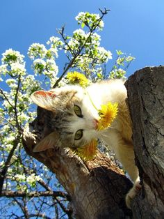 Hmm, do flowers grow on top of trees?  Doesn't matter, I look lovely.