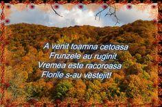 Poezia toamnei! 3, Teacher, Nature, Travel, Professor, Naturaleza, Viajes, Trips