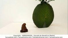 Colección de #suiseki de Juan Jose Bueno Gil y Jose Manuel Blazquez en la XI Gran Exposición de #ikebana y Cultura Japonesa, del 13 al 16 de mayo, en el Real Jardín Botánico de #Madrid.