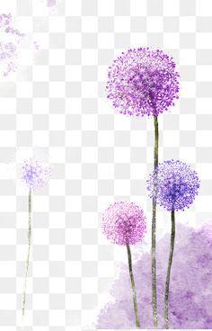 Pintado a mano de diente de León, Común Y, Purple Dandelion, Hermoso Material Pintado A Mano PNG y PSD