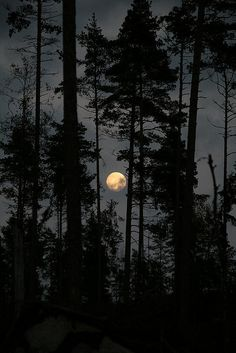 Swedish nature, Moon, Sweden,