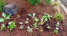 Hosta garden shared by Mary Pinkston.  www.hostasdirect.com #hostas #garden #landscape Hosta Gardens, Garden Pictures, Outdoor Ideas, Garden Ideas, Mary, Inspirational, Landscape, Plants, Scenery