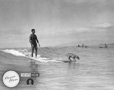 """This is """"Night Hawk"""" the surfing dog and his owner, Philip Auna, in Vintage Surf, Vintage Hawaii, Surf Posters, Hawaii Homes, Longboards, Surfs Up, Kauai, Vespa, Mans Best Friend"""