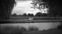 Swan in Flight.  © Paul Salmon.