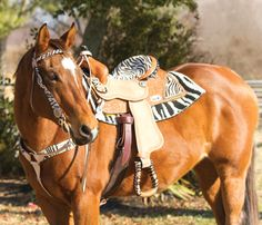 ♥Cutting western quarter paint horse appaloosa equine tack cowboy cowgirl rodeo ranch show pony pleasure barrel racing pole bending saddle bronc gymkhana
