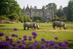 Cotswold Wildlife Park - http://www.cotswoldsadventures.co.uk/cotswold-wildlife-park/