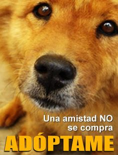 Campaña de Adopciones