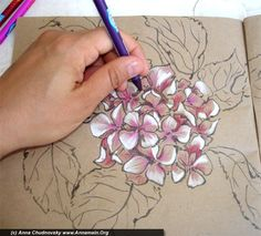 This is a great tutorial by Annamain on how to draw and color hydrangea. She has great pictures of the different steps and I find it pretty easy to follow.