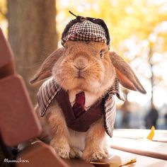 """Sher-loppy Holmes! ~ At Your Service Ma'am...  I wish to 'crack on' with your case, please give me all the details..."""