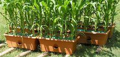 garden supplies, Garden Patch GrowBox, Grow Box, planter, container garden, patios, backyards