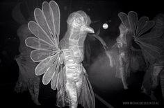 """Midwinter Carnival """" 2015 - Dunedin - New Zealand Dunedin New Zealand, Carnival 2015, Documentary Photographers, Street Photography, Documentaries, Mcqueen, Painting, Art, Art Background"""