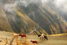 Horses on a road in Tusheti - Kaukasus-Reisen
