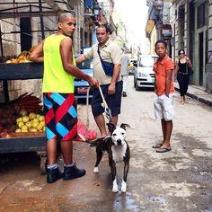 """Habana Vieja   A man with a pup shops at a carretilla in Old Havana. #havana #cuba"" Photo taken by @cubajournal on Instagram, pinned via the InstaPin iOS App! http://www.instapinapp.com (03/01/2015)"
