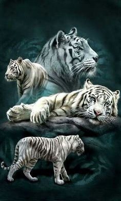 White Tigers                                                                                                                                                                                 More