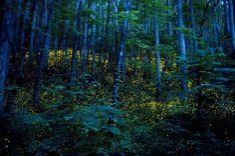 Katrien Vermeire Godspeed #6 (long exposure of fireflies)