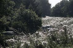 Cotton Field by Ida-Verné Stanfield #landscape #countryside #pastoral #cottonfield #photography #nature