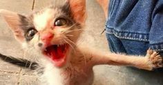 We Rescued a Terrified Abandoned Kitten – The Transformation Will Amaze You!